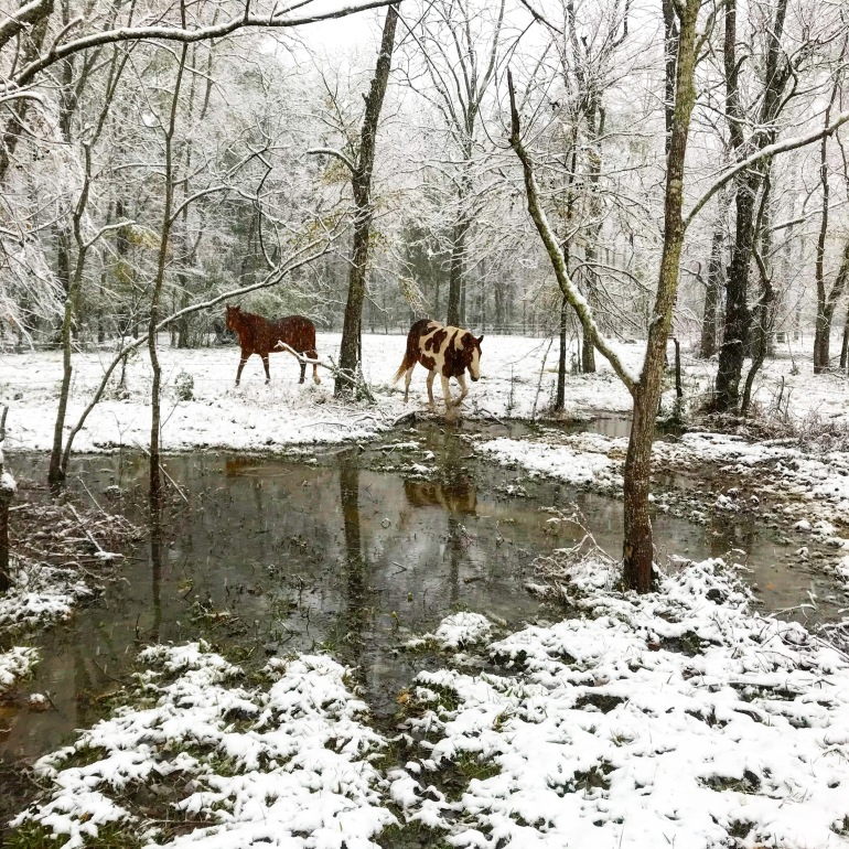 Horses in Back Pasture 4