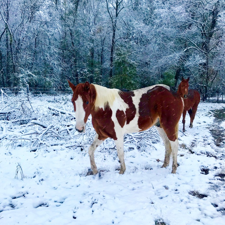 Horses in the Snow 2