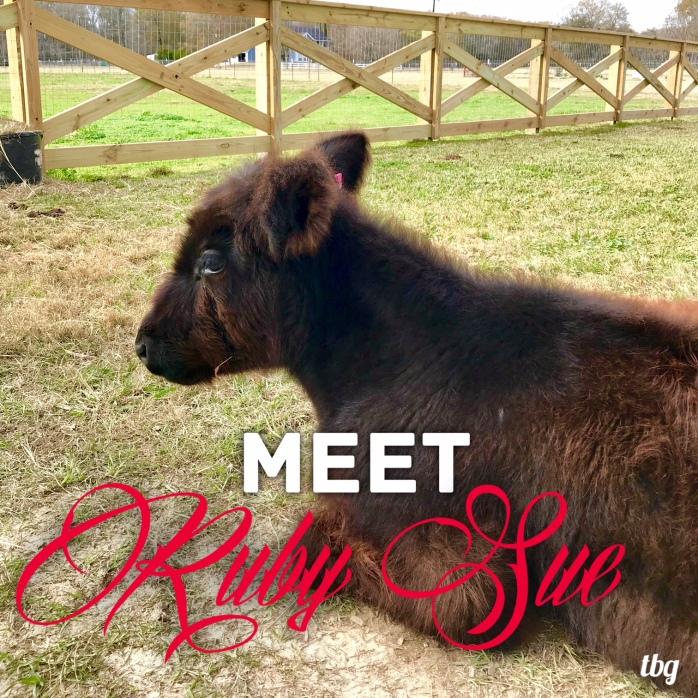 Meet Ruby Sue Graphic
