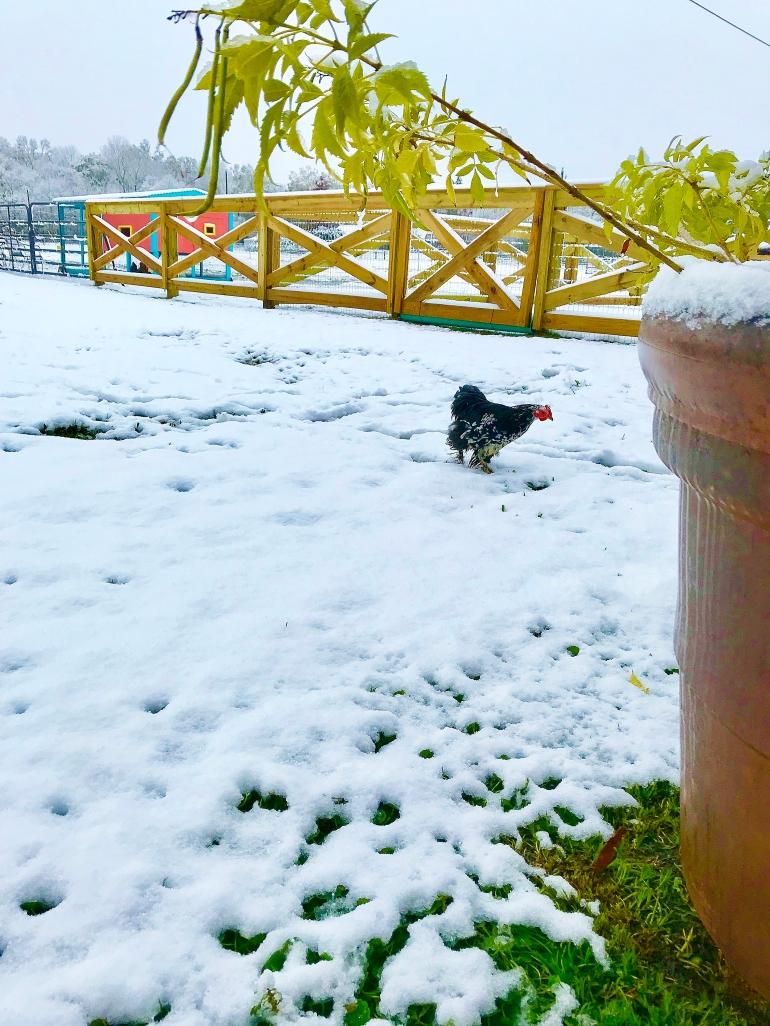 Mutt in Snow 2
