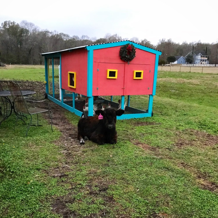 Ruby by the Coop