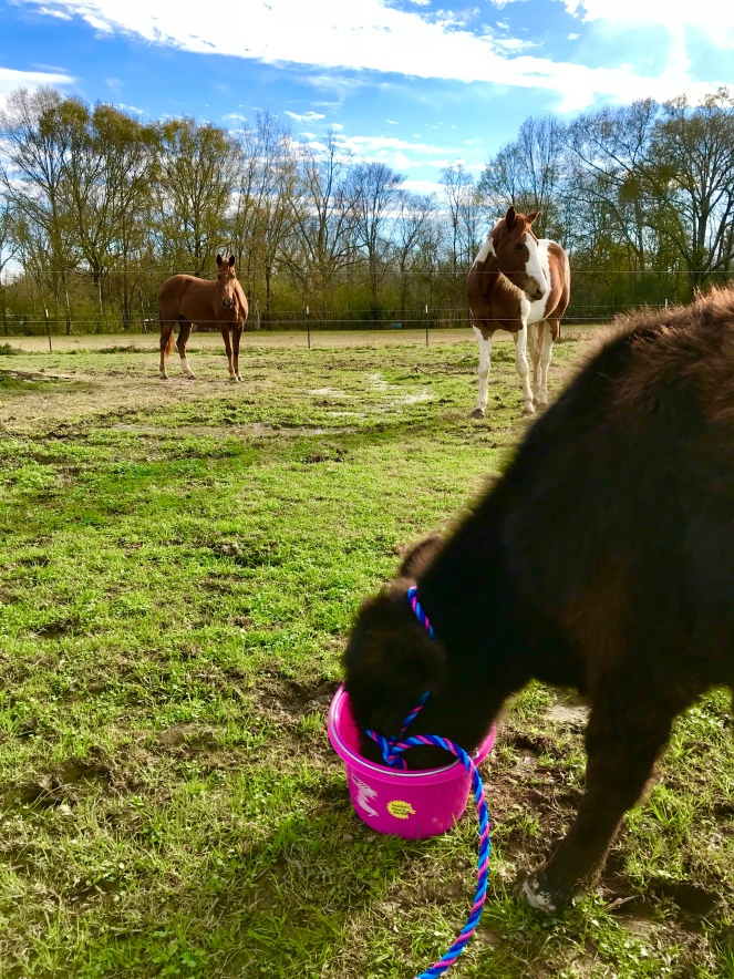 Ruby Sue and horses