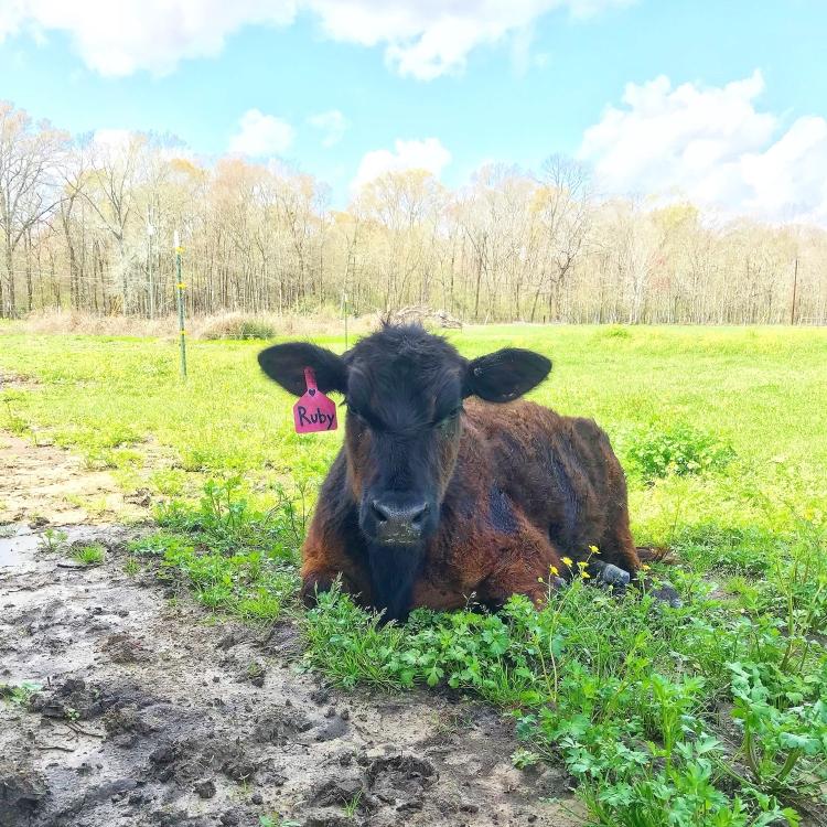 Ruby Sue in Grass